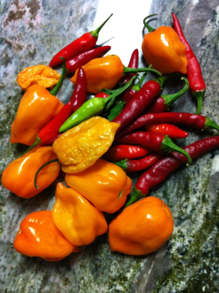 Jesse's Hot Peppers